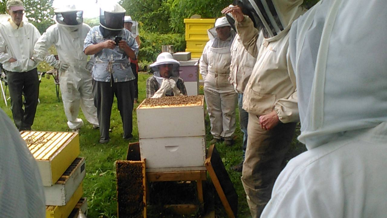 Learning about Bees at Grandmother Dannahs