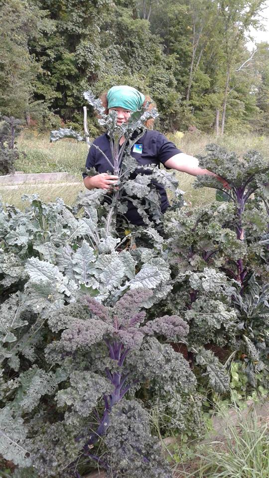 Super Tall Kale in 2016 - tall as Ama!