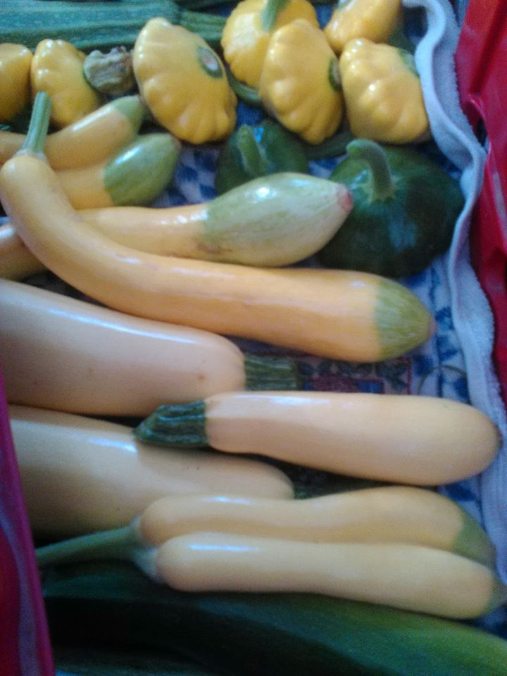 Baby Squash for sale, sweet and tender!