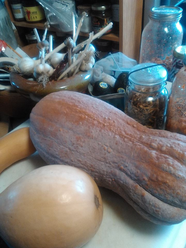 Heirloom winter squash, sweet and Nutty